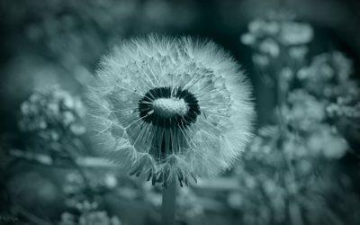Poetiske indtryk fra mindfulness forløb af Lene Stilling Børglum